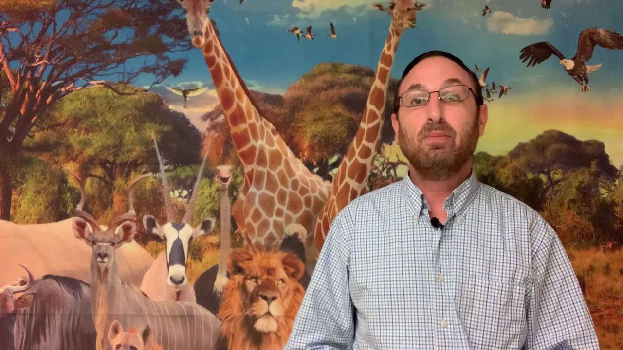 Animal Torah: Don't Be A Pig