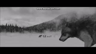 Twilight Werewolves My Demons