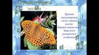 Бабочки фильм