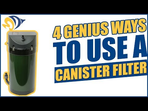 4 Genius Ways to Use a Canister Filter with Your Reef Aquarium