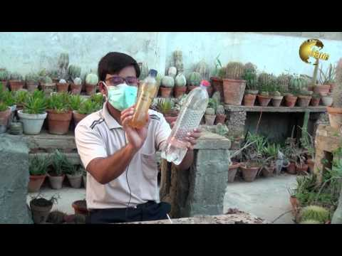How to use IndoleAcetic Acid (IAA) for plants growth in (Urdu/ Hindi)