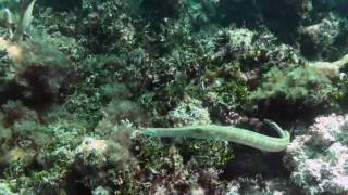 Snorkeling in Islamorada Coral Reef, Florida Keys