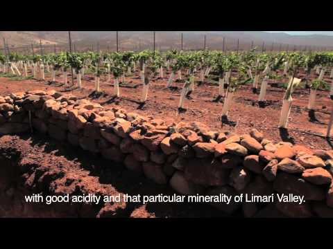 Harvest Time in Concha y Toro (Part 1): Limarí Valley