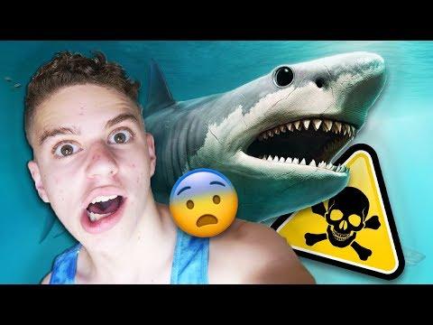 האם המגלודון עדיין חי? (כריש ענקי)