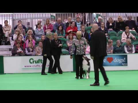 Ria & Vito's Crufts Dog Obedience Championships 2017