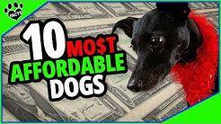 Top 10 Most Affordable Dog Breeds - Buddies on a Budget