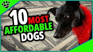 Affordable Small Dog Breeds – Top 10 Buddies on a Budget
