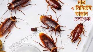 মাত্র ২ মিনিটে ঘর থেকে তেলাপোকা ছারপোকা দূর করুন  || Cockroach Killing Tips