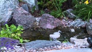 2012 Ottawa Water Garden Festival