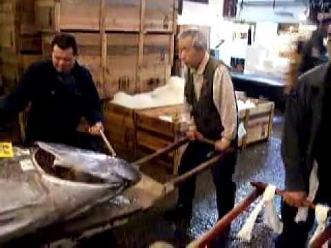 Cá Ngừ khổng lồ tại Nhật Bản (Big tuna in Tokoyo)