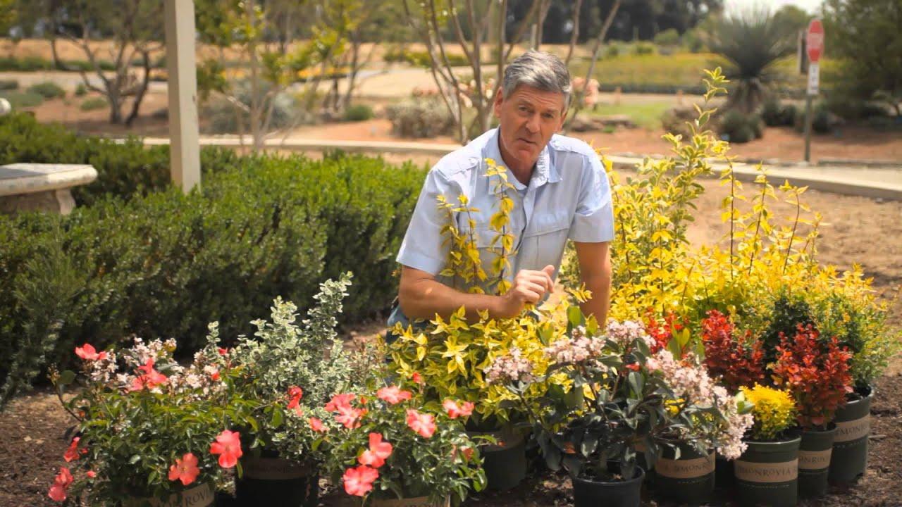 How to prune back small shrubs garden savvy youtube for Short bushes for landscaping