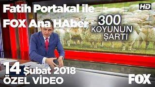300 koyun projesi netleşiyor! 14 Şubat 2018 Fatih Portakal ile FOX Ana Haber
