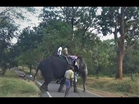 Mudumalai National Park and Wildlife Sanctuary - Ooty - Tamil Nadu - India