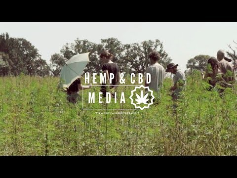 UK Hemp Farm loses license and has to destroy £200,000 worth of it's Crop!! An Interview with HEMPEN