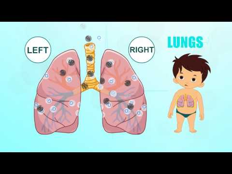 Lungs | Human Body Parts | Pre School |  Animated Videos For Kids