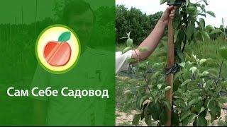 Опоры для низкорослого сада(, 2011-06-22T19:37:27.000Z)