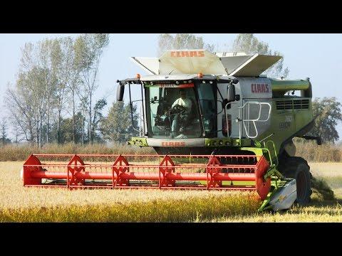 Claas Lexion760 TerraTrac mietitura riso / rice harvest 29/10/2016