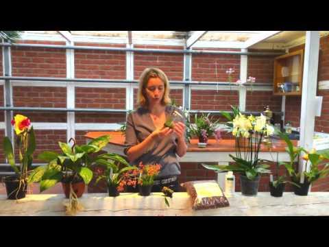 orchideengarten-karge-und-das-orchideencafe-die-gaertnerei