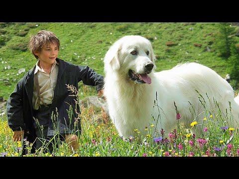 高分宠物电影,男孩捡了条流浪狗,哪知却是大白熊犬,赶走狼群还帮他们逃出魔爪