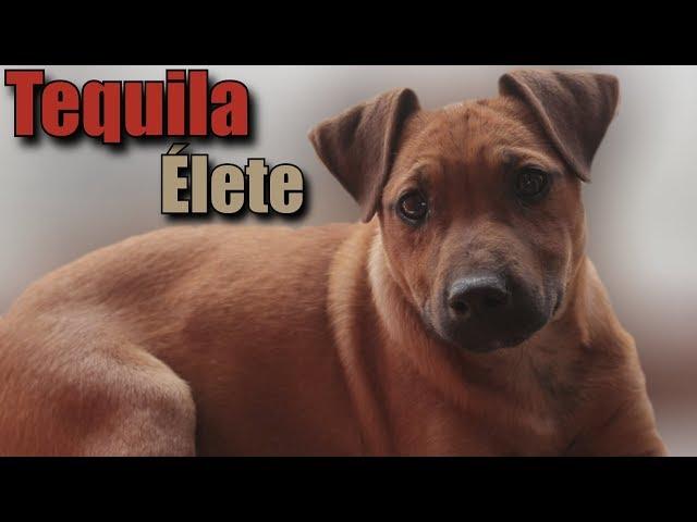 Tequila Élete!