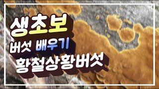 황철상황버섯 배우기 #상황버섯 #상황버섯종류 #상황버섯…