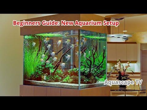 Setting Up Your New Aquarium: Beginners Guide | Aquascape TV