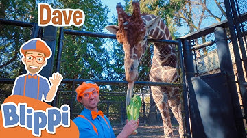Blippi Feeds Animals At The Zoo!   Learn About Animals For Kids   Educational Videos For Toddlers