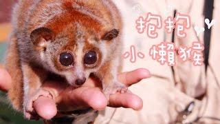 日本北九州之旅(二)♡抱抱小懶猴。九州自然動物公園
