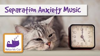 Sleep Music for Cats to Help with Separation Anxiety