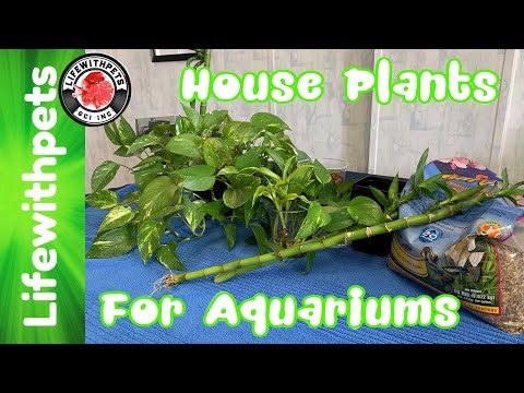 How To Use  House Plants In  Your Aquarium (In Depth)