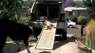 Train A Dog To Use A Car Ramp