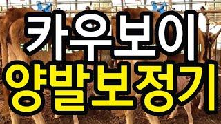 신일축산 양발보정기 02-438-0300 축산정보114