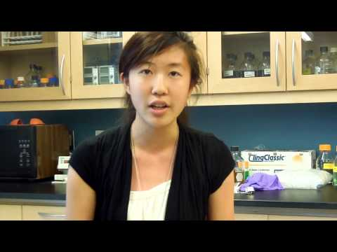 Margaret Shen - High School Stem Cell Research Intern - Summer 2013