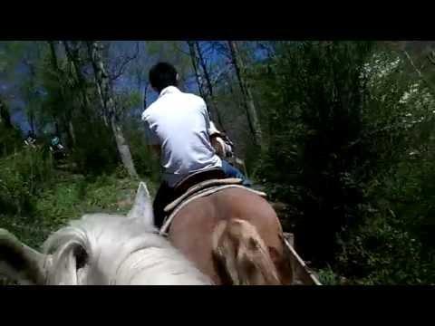 Horseback Riding in Gatlinburg, TN