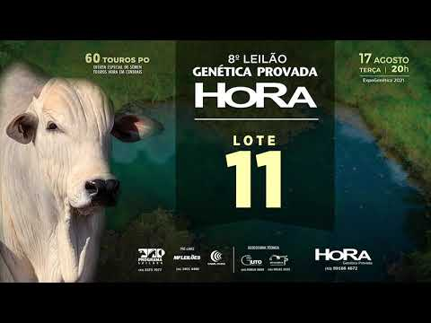 LOTE 11