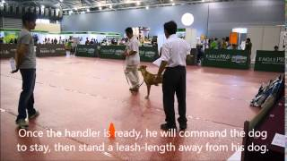 Dog Obedience Competition - Pre-novice Class