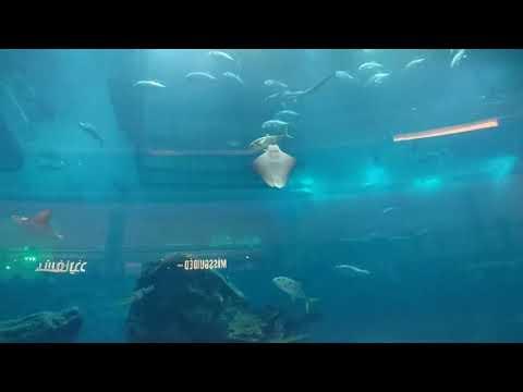 the lost chambers aquarium palm jumeirah & Dubai aquarium