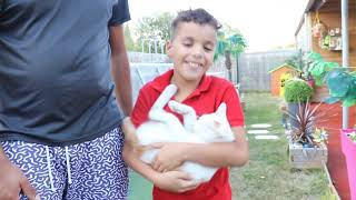 I lost my cat ,kids pretend play ,funny videos for kids