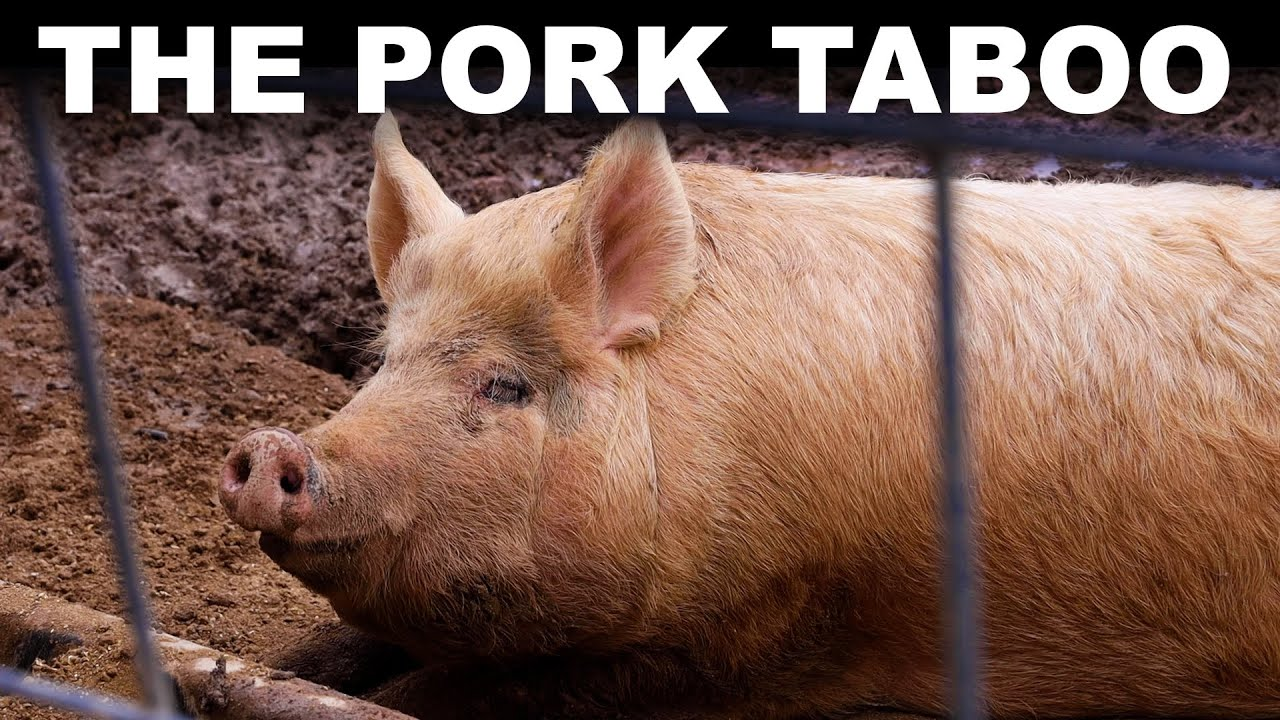 Why billions of people won't eat pork (or why we don't know) - download from YouTube for free