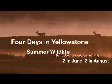 Four days in Yellowstone