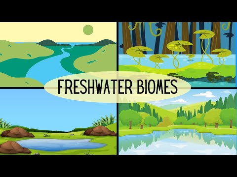Types Of Freshwater Ecosystems-Lakes-Ponds-River-Streams-Wetlandss