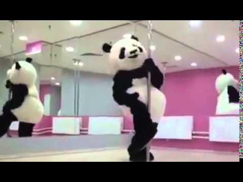 Oso panda bailando more videos on linecamscom - 5 3