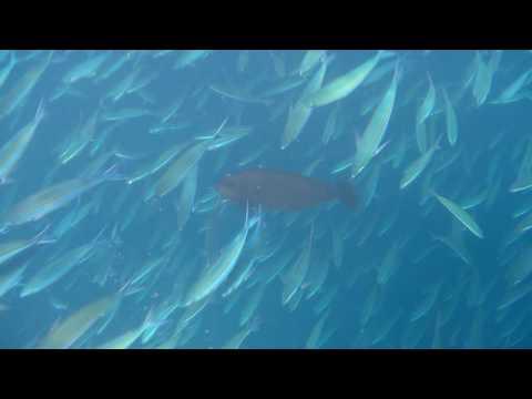 Snorkeling at Centara Grand Resorts & Spa, Maldives 2