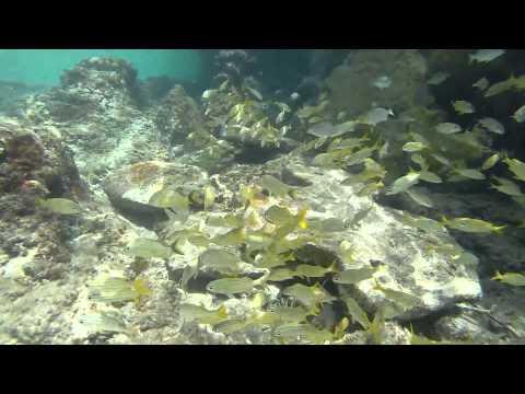 Our Last Snorkel In Front Of El Cozumeleno Resort.