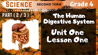 Science | Grade 4 | Unit 1 Lesson 1 - Part 2 - The Digestive Canal