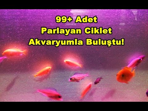 Akvaryuma Balık Eklenmesi | 99+ Adet !