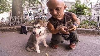 Первая прогулка щенка на улице