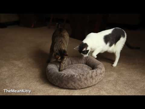 Mean Kitty - Something's In My Bed!!!