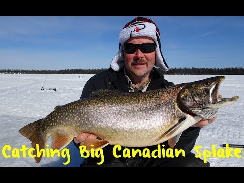 Ice Fishing for Massive Canadian Splake