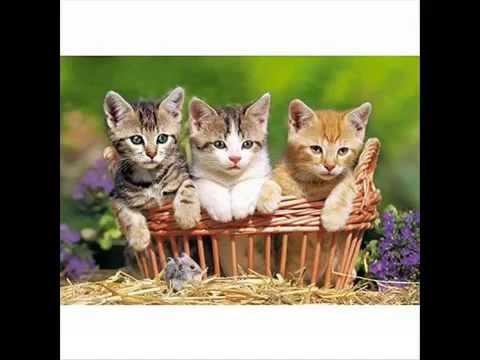 Trois Petits Chats (COMPTINE Pour Enfant)